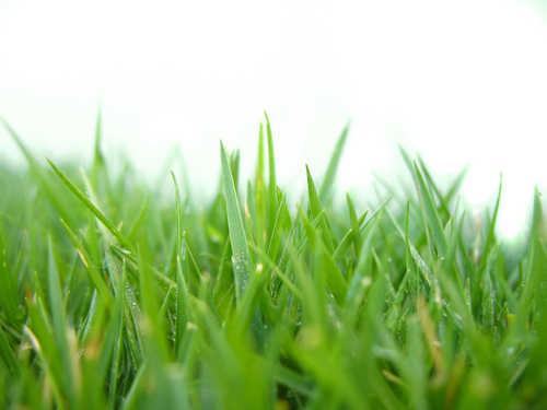 Image Result For Mowing And Gardening Services